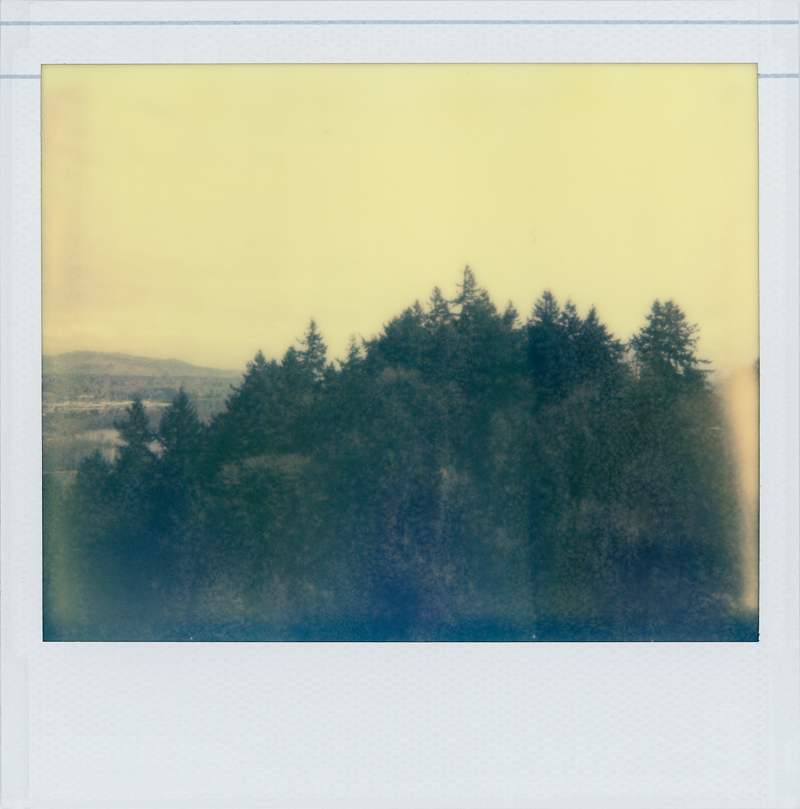 tram_trees_spring_web